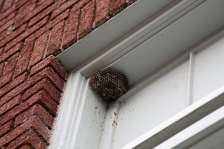 We provide a wasp nest removal service for domestic and commercial properties in Maylandsea.